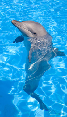 dolphin facts to make your florida beach vacation more fun
