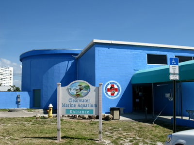 Clearwater Aquarium Clearwater Fl Home Of Winter The Dolphin