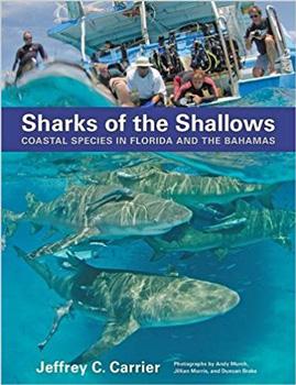 Florida Shark Facts - Florida Beach Vacation - Shark Attack