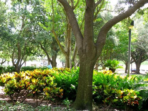 pioneer park view of landscaping in st petersburg fl