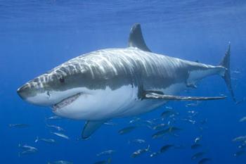 florida beach vacation shark facts