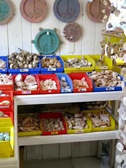 florida shell shop inside shelves treasure island fl