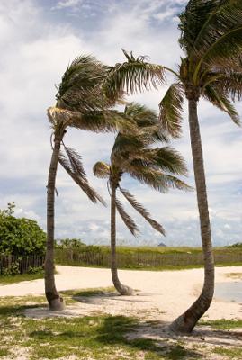 florida hurricane season palms