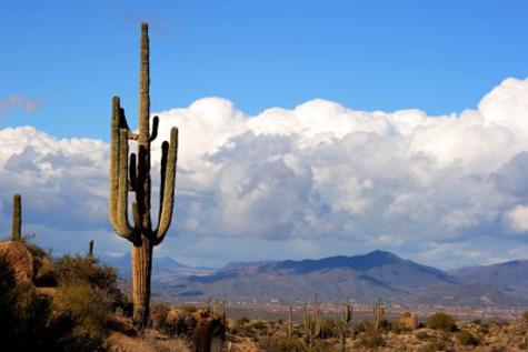 Networking in Phoenix AZ
