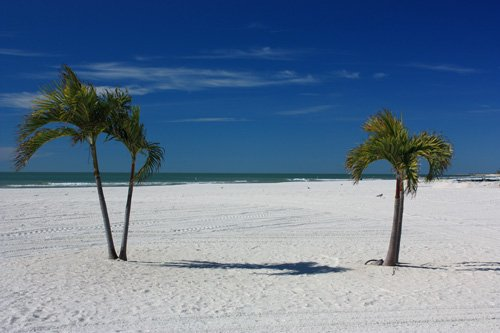 st pete beach palms and gulf of mexico